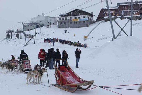 husky race (3)