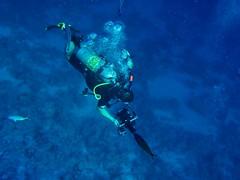 to satisfy curiosity (werner boehm *) Tags: vacation holiday redsea dive egypt sharmelsheikh ägypten tauchen wernerboehm rotesmerr