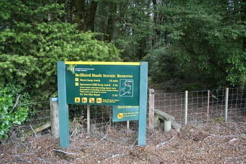 Bellbird bush