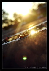 ... Day 74... Reflecting a Falling Day (E. IV) Tags: light sun blur water silhouette puddle leaf glare angle bokeh ground reflect flare rays dop