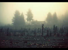 Sammamish early morning on halloween day (sparth) Tags: morning trees house halloween field fog pine farm pumpkins foggy spooky explore 50th frontpage 70200 pinetrees atmospheric sammamish 70200f4l 5dmarkii