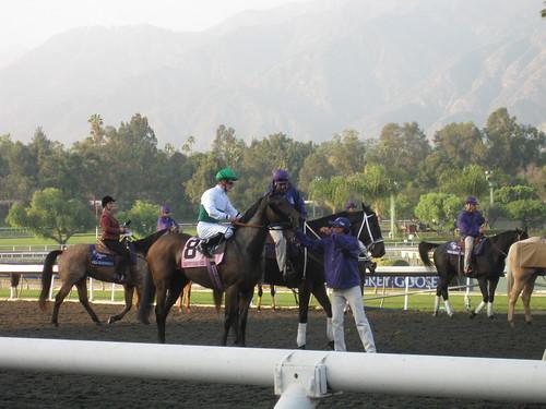 california horse cup championship unitedstates racing thoroughbred arcadia breeders eyefi zenyatta 2009breederscup