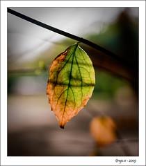 Transicin 1 (grego.es) Tags: parque autumn naturaleza sevilla andaluca sony otoo favorita 2009 amate alpha700 wwwgregoes jpa008