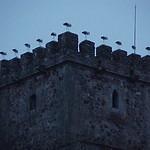 Cáceres: cigueñas alineadas