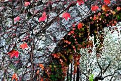 colori d'autunno