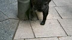 p****g dog (BlackIsz) Tags: dog berlin germany deutschland december hauptstadt snapshot hund capitol piss pissing dezember allemagne pinkeln