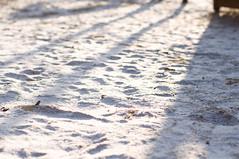 snowed. (youngdoo) Tags: winter snow afternoon walk sunday korea neighborhood siji