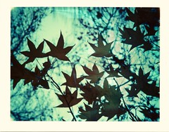 Many of the phenomena of winter are suggestive of an inexpressible tenderness and fragile delicacy [H.D. Thoreau] (Ilaria ♠) Tags: winter polaroid blu explore ferrara expired 669 colorpack peelapart colorpackii