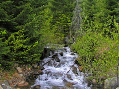 Babbling Brook (Trystian Sky) Tags: outdoors woods stream olympus brook c4040 cleelumlake c4040z olympus4040z 4040z olympus4040zoom