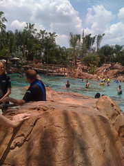 Discovery Cove -- Swimming With the Rays