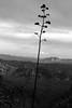 Century Plant Silhouette: Arizona (jswensen2012) Tags: arizona desert peraltacanyon superstitionmountains centuryplant agave sonorandesert mountains tontonationalforest