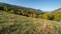 Long valley (Dream Rebellion) Tags: landscape wide forest nature valley tree blue sky field large paysage foret champs ciel bleu vallée vert autumn autonme