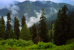 Kashmir Pakistan (M.Rizwan Rafique) Tags: pakistan sky cloud tree green nature beautiful pine forest amazing peace natural meadow kashmir charming greenary azadkashmir