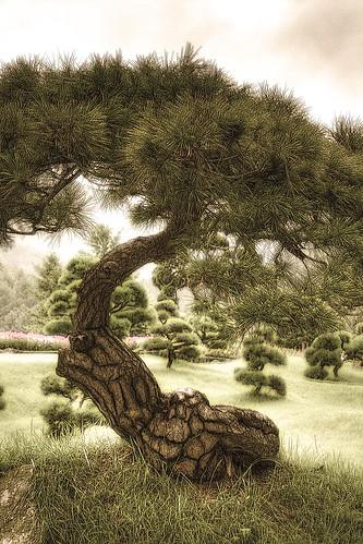 Albero Zen - Zen Tree - copyleft by Dino Olivieri