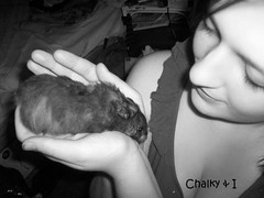 Chalky & I (xFallingStar) Tags: pets rodents hamsters chalky