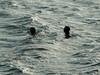 in due in acqua