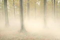 Autumn is There (Ben Heine) Tags: morning autumn trees mist tree fall nature monochrome leaves misty fog sepia clouds forest automne season print dawn belgium unique magic ardennes harrypotter surreal atmosphere poland monotone boom oxygen nostalgia mystical lichen trunks melancholy nuage magical spa arbre depth brouillard thick evanescence fort bois feuilles brume sfumato magician ecosystem ambiance highres bosquet disappear profondeur rose explosionoflight softcolours otwock troncs druide mywinners benheine thesuperbmasterpiece hubzay flickrunitedaward infotheartisterycom