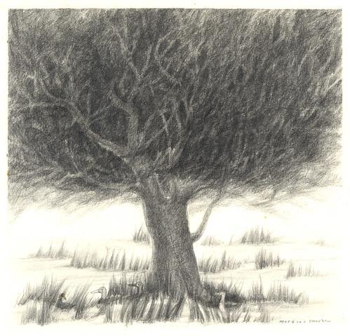 你拍攝的 荒野中的大樹。