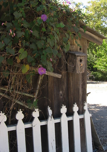 Birdhouse and morning glories