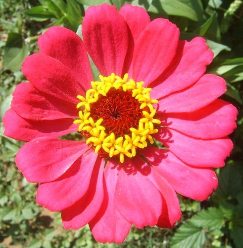 Flower From Oaxaca