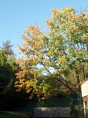Tree_10609