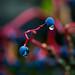 Unidentified wet berries (1 of 2)