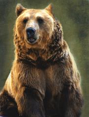 Niedwiadek / Bear (raphic :)) Tags: bear las wild portrait mountains texture forest zoo gry bieszczady przyroda dziki niedwied raphic subcarpathia updatecollection mygearandmepremium mygearandmegold