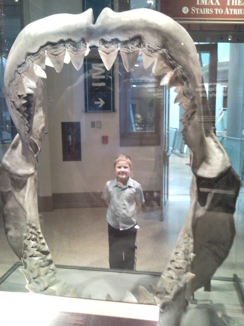 eaten alive by prehistoric shark