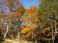Moncayo en Otoo (Javier Garcia Alarcon) Tags: rboles paisaje bosque rbol otoo moncayo