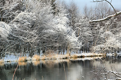 A Christmas Snow (` Toshio ') Tags: park trees winter snow ice nature water field creek forest frozen branch snowstorm maryland icy midatlantic toshio annearundel kinderfarmpark kinderfarm
