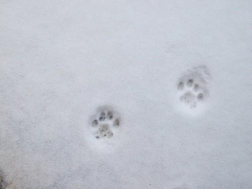 21 dicembre 2009 - impronte