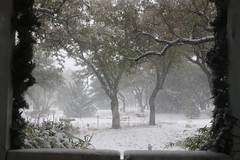 A first for Central Texas.... (basilly) Tags: cold beautiful amazing texas blizzard blowingsnow acountrycalledtexas twtme timingiseverything theheartland fallandwinteraroundtheworld angrysnow tbasab onlythe2ndwhitechristmasirememberhere