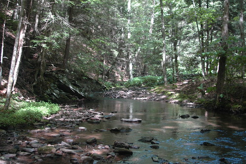 Shaded Maryland Creek