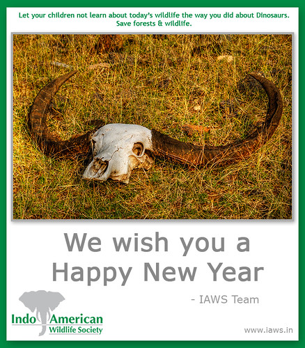 iaws-2010-new-year-wishes-4