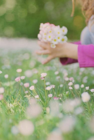 Kópia – kvet (5)