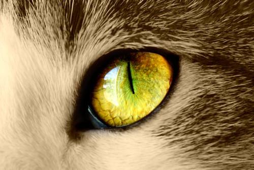 Czy koty rozróżniają barwy?