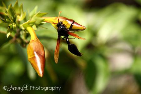 bugs-life2