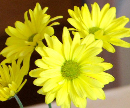 yellow daisies on the counter