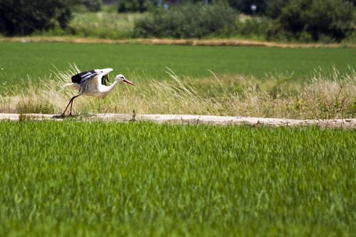 Stork #2