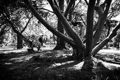 a photographer's stroll through the park (kathleen.bradley) Tags: park trees shadow bw newyork nature monochrome blackwhite candid photowalk albany newyorkstate nys washingtonpark cwd classwithdavedave cwdweek131 worldwidephotowalk scottkelbyworldwidephotowalk humansinnature cwd1311