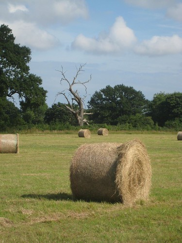 Wimborne hay bales 2