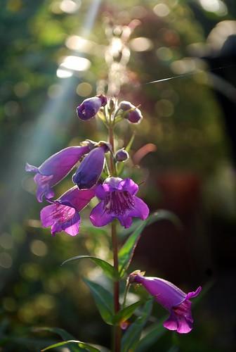 Garden at Morniing Light (2)