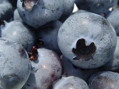 Blauwe bessen Blueberries