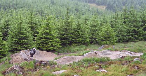 pine-fresh-berm