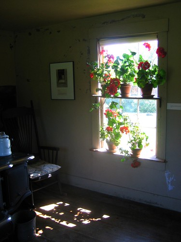 Geraniums in Kitchen @ Olsen House