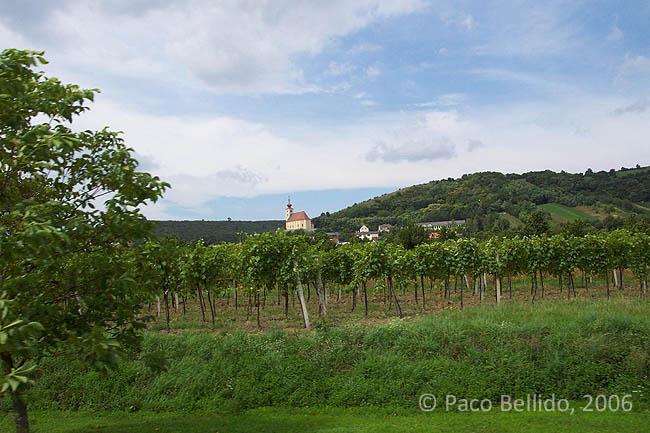 Más viñas. © Paco Bellido, 2006