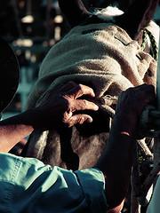 Palanque (Gilnei Baruio Silva) Tags: criollo fiesta jinete cavalo gauchos botas monta gaucho doma gacho gachos esporas palanque crioulo criolla jineteada espora gineteada ginete garro espuela campeiros campeiro
