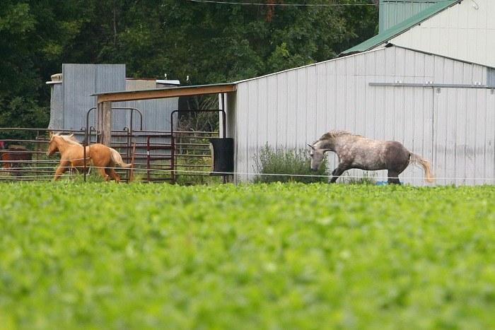 08-31-crop-horses