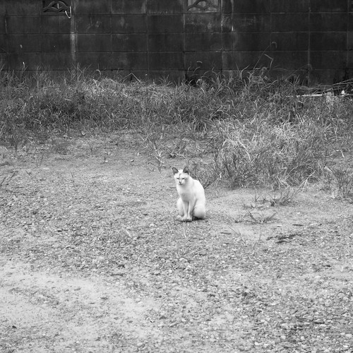 Today's Cat@20090904