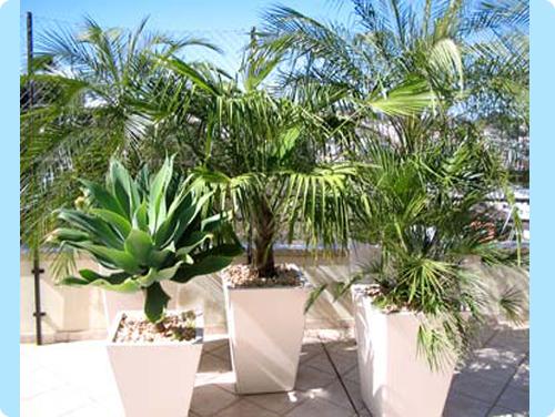 vasco com planta ornamental